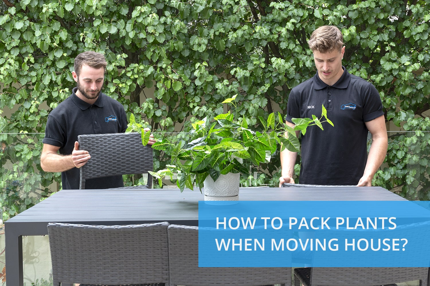 How to pack plants when moving house?